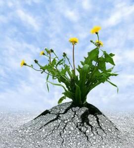 Symbol für Resilienz, Widerstandskraft, Beharrlichkeit